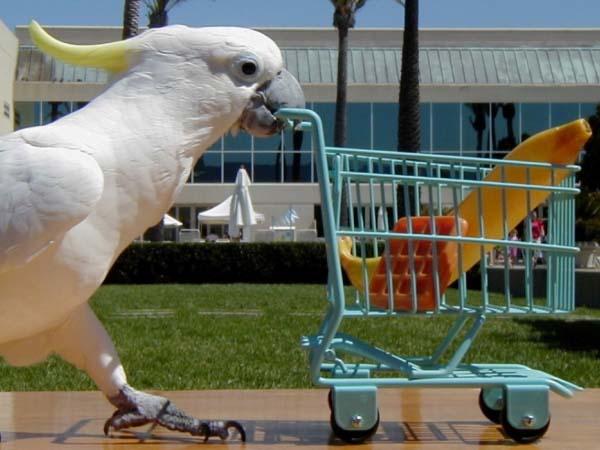 happy_birds_3_600x450px