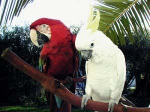 Happy Birds